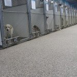 pet shop sunone floors
