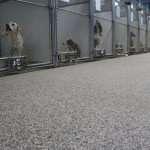 pet shop epoxy floors