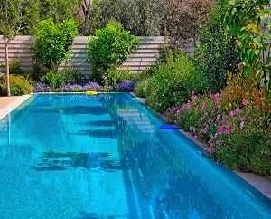 pool deck plants